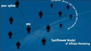 Sunflower model of MLM